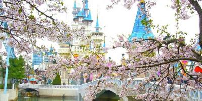 Korea Seoul Lotte World Theme Park Cherry Blossom 800x400