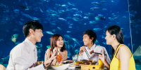 Ocean Park Buddies Travel Dining Experience