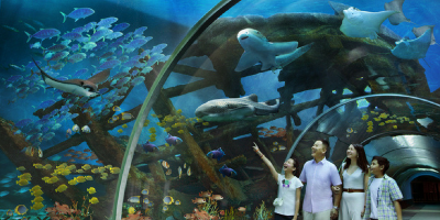 Singapore S.E.A Aquarium Tunnel 800x400