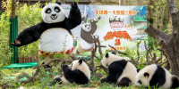 China Guangzhou Chimelong Safari Park Kungfu Panda 3 800×400