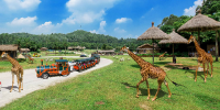 China Guangzhou Chimelong Safari Park Open Safari 800×400