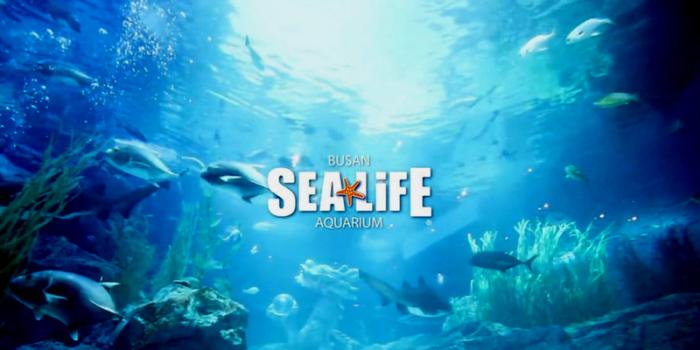 Korea Busan Sealife Aquarium Marine Life 800×400