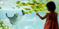 Korea Busan Sealife Aquarium Smiling Stingray 800×400