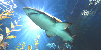 Thailand Bangkok SEA LIFE Siam Ocean World Giant Shark 800x400