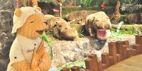 Korea Jeju Teddy Bear Teseum Teddy Amazon 800×400