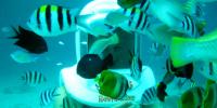 Philippine Boracay Helmet Diving Fishy 800×400