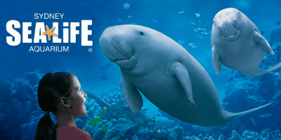 Australia Sydney Sea Life Aquarium Dugongs 800x400