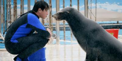 Taiwan Yehliu Ocean World Seal Kiss 800x400