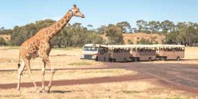 Australia Melbourne Werribee Open Range Zoo 800x400