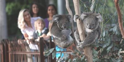 Australia Melbourne Zoo 800x400