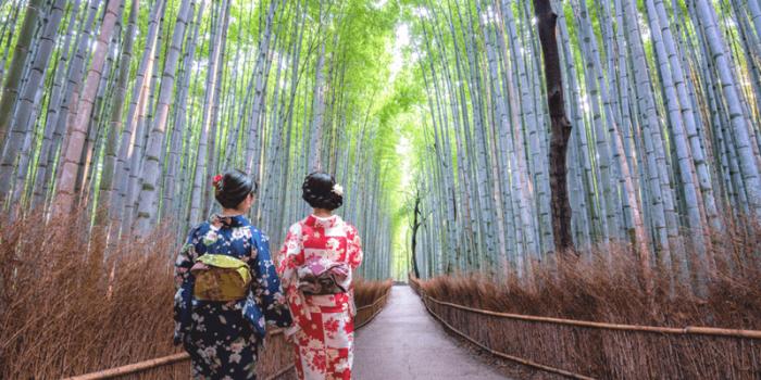 Japan Kyoto Arashiyama Bamboo Grove 800×400