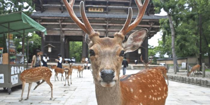 Japan Nara Deer Park 800×400
