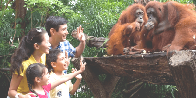 Singapore Zoo Jungle Breakfast with Wildlife Family Fun 800x400