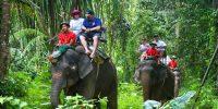 Thailand Mea Taeng Elephant camp
