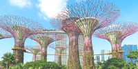 Singapore Garden by The Bay Supertrees 800×400