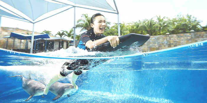 Singapore Resort World Dolphin Island Adventure Experience 800×400