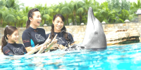 Singapore Resort World Dolphin Island Discovery 800×400