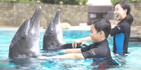 Singapore Resort World Dolphin Island Interact Fun 800×400
