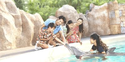 Singapore Resort World Dolphin Island Observer 800x400