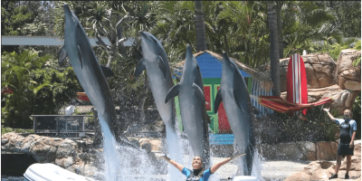 Australia Gold Coast Sea World Affinity Dolphin Presentation 800x400