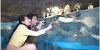 Hong Kong Ocean Park Couples with Peguin 800×400