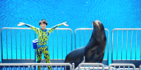 Hong Kong Ocean Park Dolphin and Seal 800×400