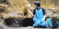 Japan Osaka Aquarium Kaiyukan Capybara feeding 800×400