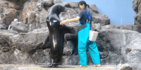Japan Osaka Aquarium Kaiyukan Standing Sea Lion 800×400