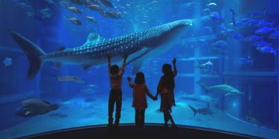 Japan Osaka Aquarium Kaiyukan Whale Shark with kids 800x400