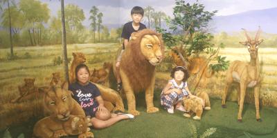Korea Jeju Island Africa Art Museum Kids Fun 800x400