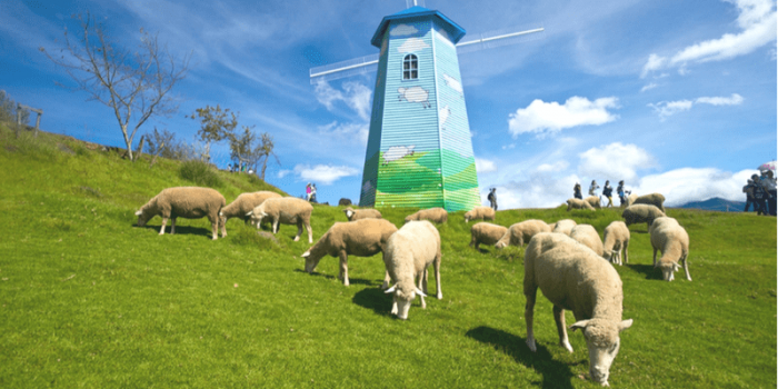 Taiwan Cinjing Farm Visit Sheeps 800×400