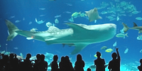Taiwan Kenting National Museum of Marine Biology and Aquarium 800×400