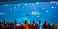 Zhuhai Chimelong Ocean Kingdom – Ocean Sleepover Package 800×400