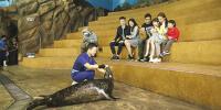 Hong Kong Ocean Park Meet The Sea Lion 800×400