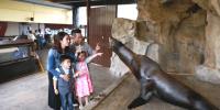 Hong Kong Ocean Park Meet The Sea Lion Kids Fun 800×400
