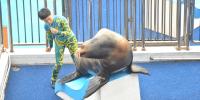 Hong Kong Ocean Park Sea Lion 800×400
