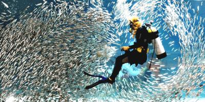 Korea Seoul COEX Aquarium 800x400